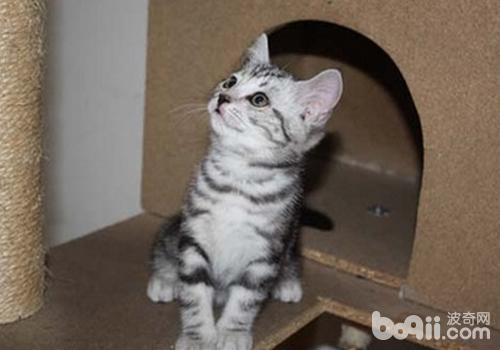 如何判断猫有无下泌尿道疾病-猫咪常见病